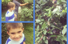 Blueberry Picking at Hillside Orchard and Farm Market